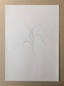 gras studie grass drawing zeichnung